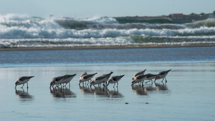 corrubedo-ladeira-gaviotas