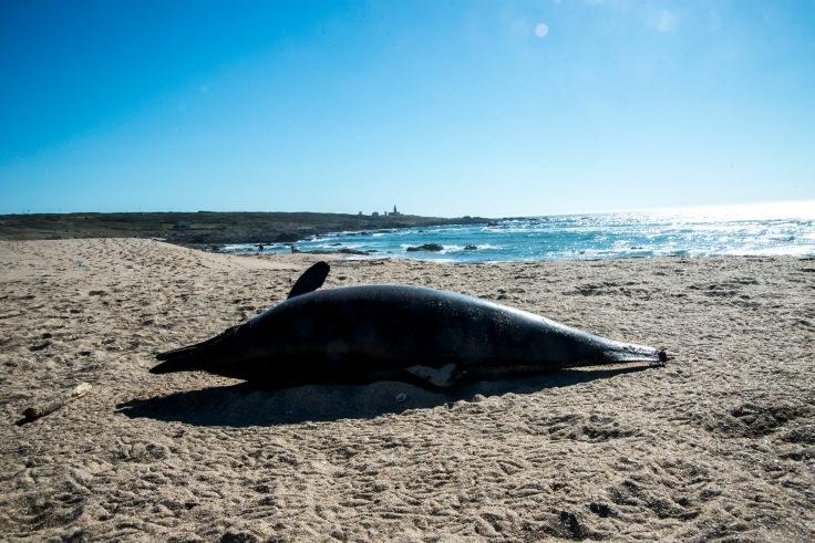 balieiros-corrubedo-delfin.JPG
