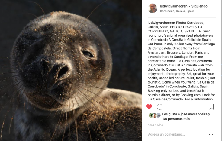 foca-balieiros-instagram.png