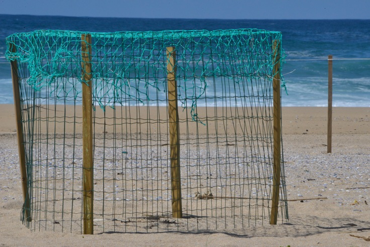 pillara-dunas-corrubedo-jaula.JPG